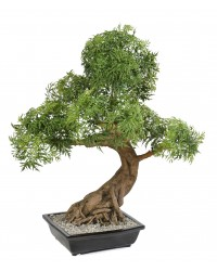 BONSAI ARALIA   EN COUPE artificiel