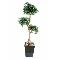 Ficus artificial RETUSA CRAZY