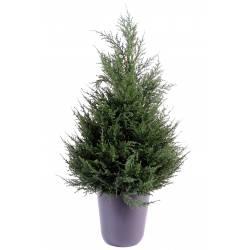 Cypress artificial Juniperus