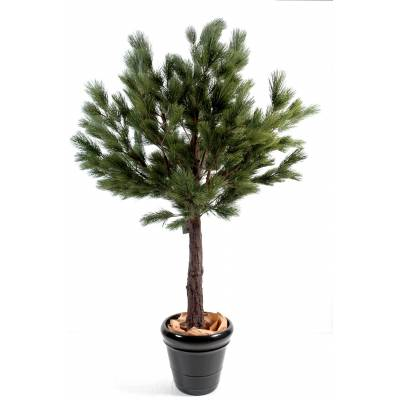 Pine artificial Austria HEAD