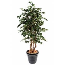 Ficus artificial EXOTICA