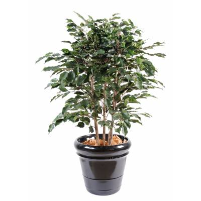Ficus artificiel EXOTICA BUISSON