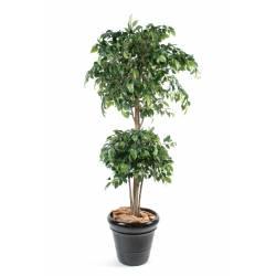 Ficus artificial DOUBLE BALL