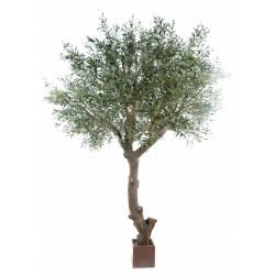 Olive tree head giant