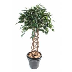 Ficus artificial CAGE