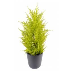 Juniperus artificial (cupressus macrocarpa gold)