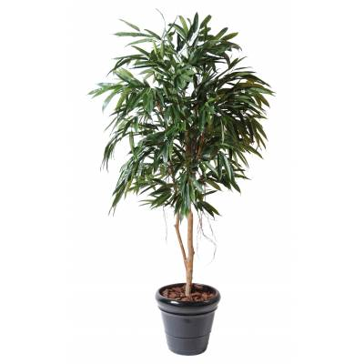 Ficus artificiel ALII ROYAL