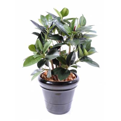 Ficus artificiel ELASTICA BUISSON (RUBBER PLANT MULTITREE)