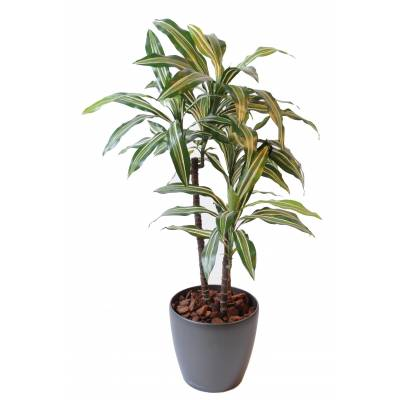 Dracaena artificial FRAGRANS *3