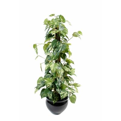Pothos artificial GUARDIAN COCO