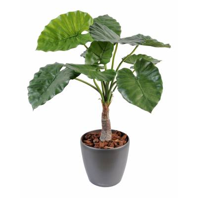 Alocasia artificial calidora