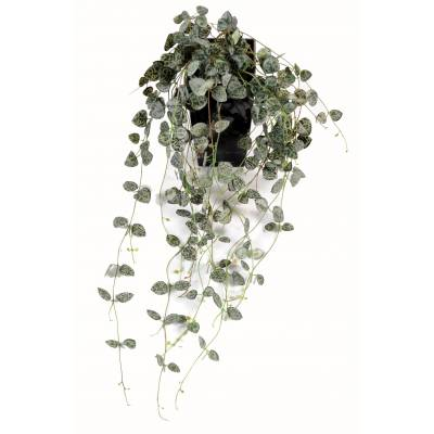 Ceropegia artificial (chain of hearts)