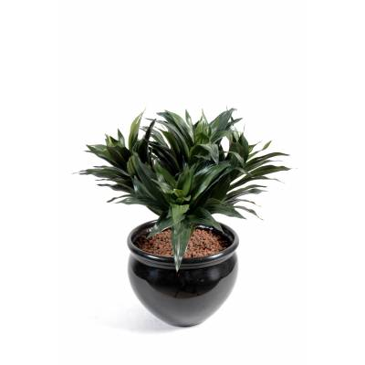 Dracaena artificiel FRAGANS