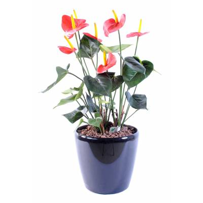 Anthurium artificiel *7
