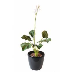 Hosta artificiel fleuri