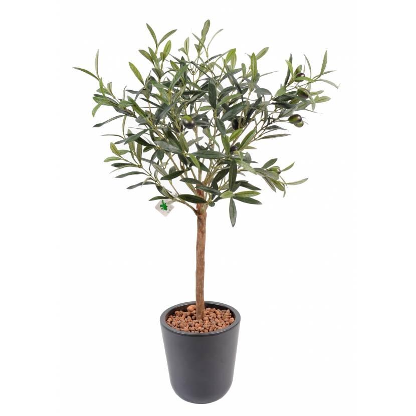 Marvelous Arbre Olivier En Pot #9: OLIVIER PLANT POT 10