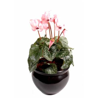 Cyclamen artificial *8