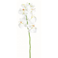 Phalaenopsis artificial STEM MEDIUM*6