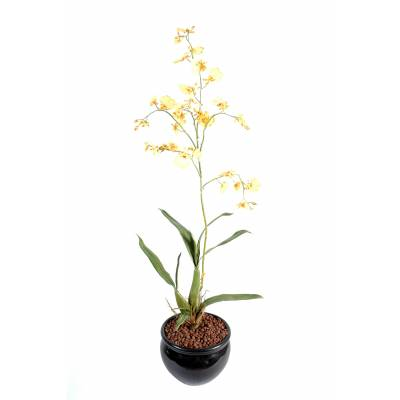 Oncidium artificial GEANT