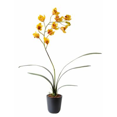 Cymbidium artificial