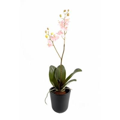 Phalaenopsis artificial M*8