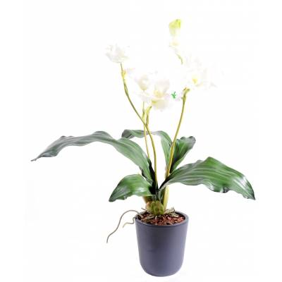Lycaste Orchid artificial