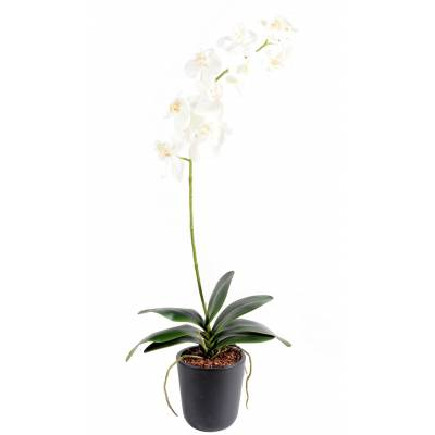 Phalaenopsis artificial L*11