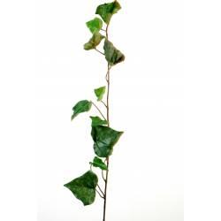 Ivy artificial STEM