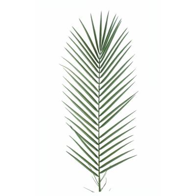 Phoenix artificial PALM PLASTIC PM