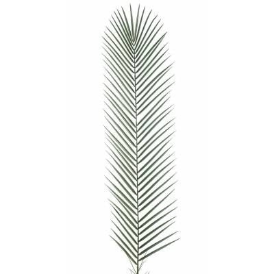 Phoenix artificial PALM PLASTIC GM
