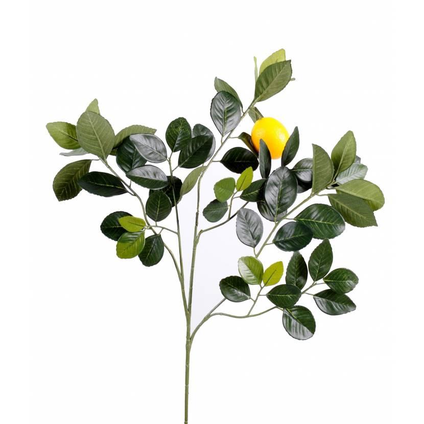 LEMON TREE GOLDEN SPRAY AND FRUIT M