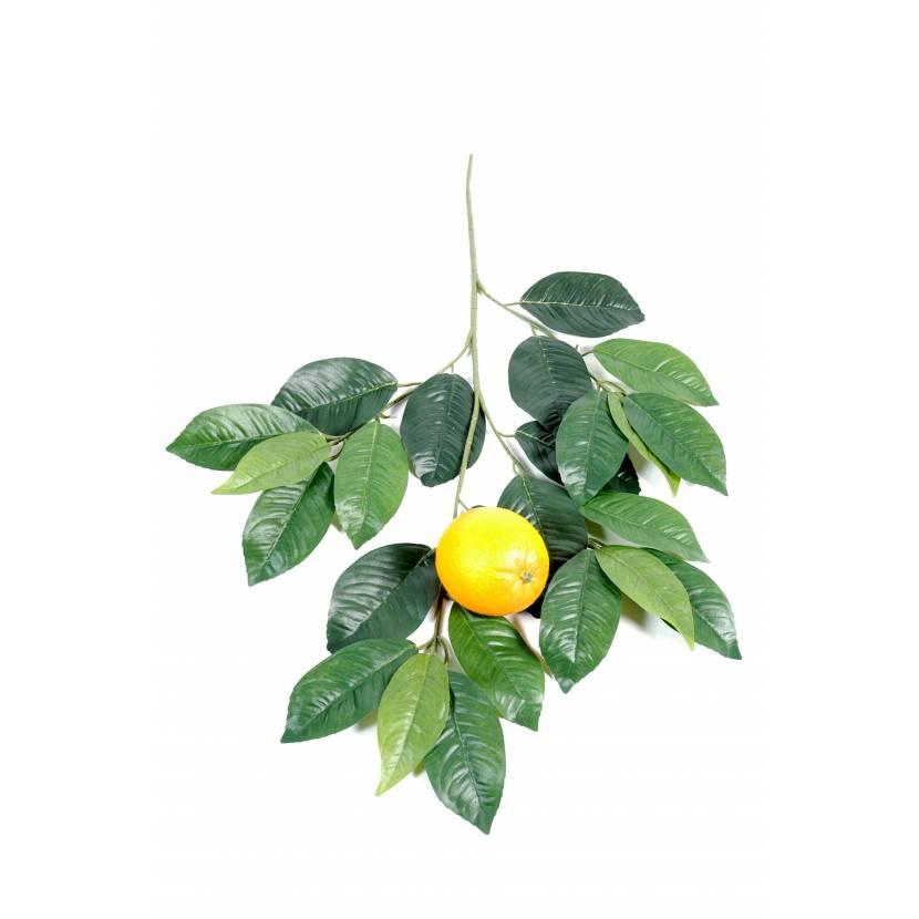 ORANGE TREE SPRAY AND FRUIT GM