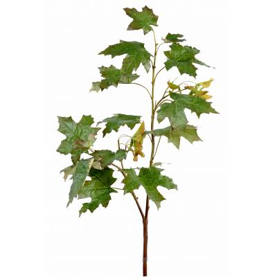 Maple artificial BRANCH