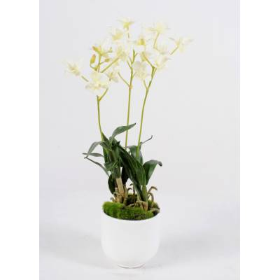 Dendrobium artificiel POT