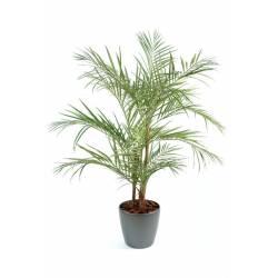 Areca Palm artificiel en pot rond