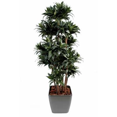 Dracaena artificiel FRAGANS EN QUADRO