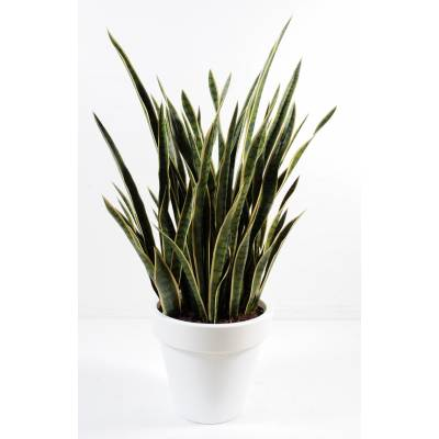 Sansevieria artificiel en pot pure