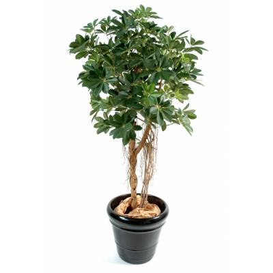 Schefflera artificial BABY TREE