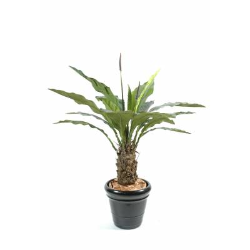 Anthurium artificial jungle king