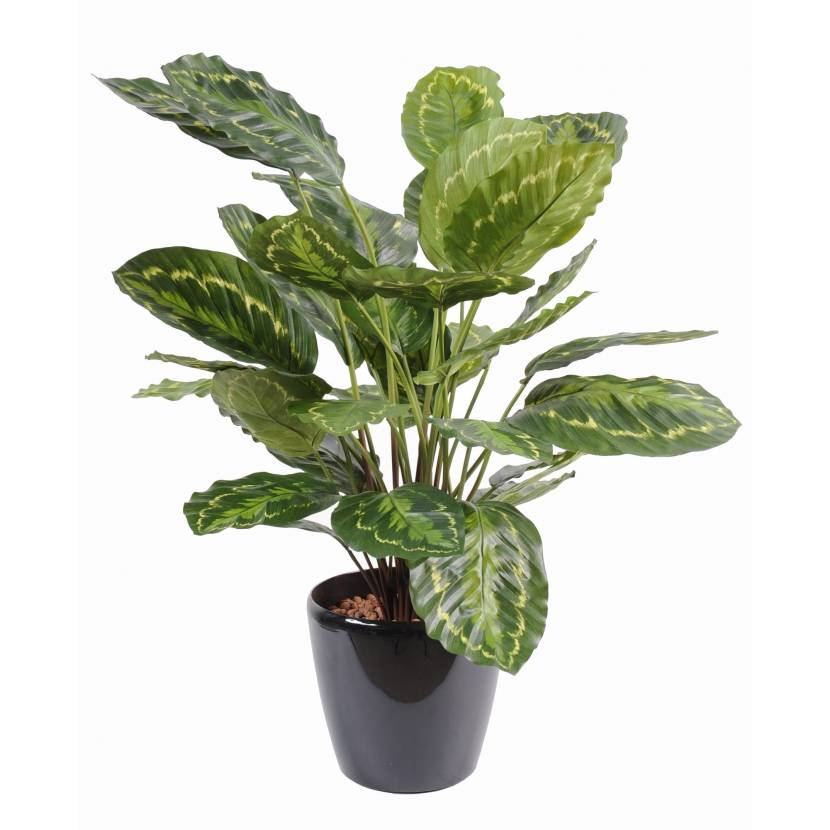 Calathea artificiel roseopicta for Plantes vertes artificielles haut de gamme