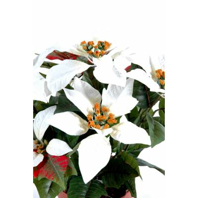 Poinsetia artificiel*9