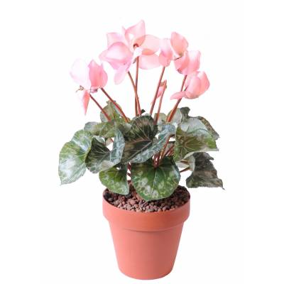 Cyclamen artificiel *8