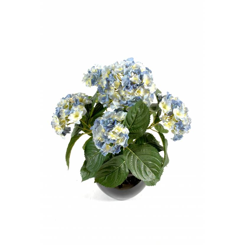 HYDRANGEA PLANT 5T