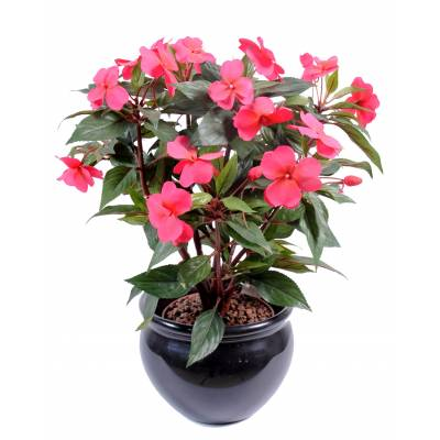 Impatiens artificial PICKET