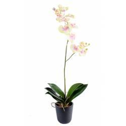 Phalaenopsis artificielle L*12