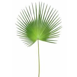 Palme artificielle PALMIER CAMERUS