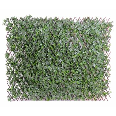 Aralia artificial fence