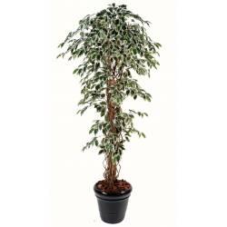 Ficus artificial LIANAS GF