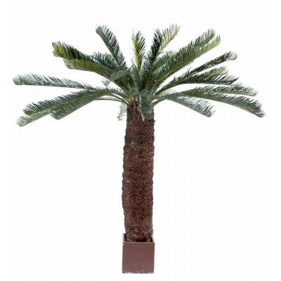 Cycas artificial GEANT