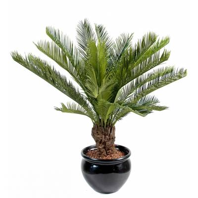 Cycas artificial TRUNK